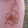 hibiscus 2008